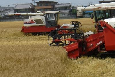 小麦刈取り開始