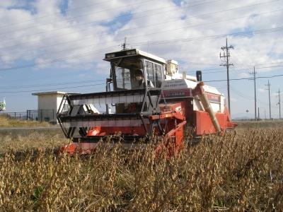 大豆刈取り開始