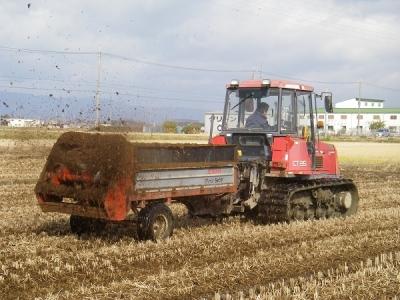 牛糞堆肥の散布