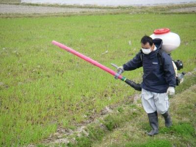 小麦の追肥