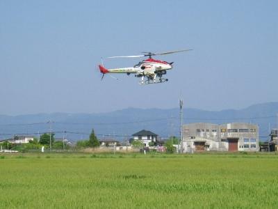 小麦の無人ヘリ防除