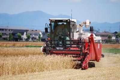 小麦刈取り始まりました