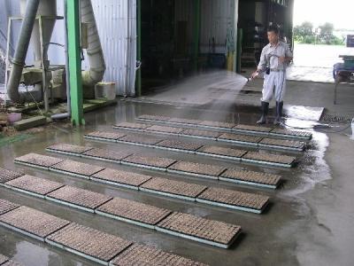 キャベツ・ブロッコリー・ハクサイの播種開始です。
