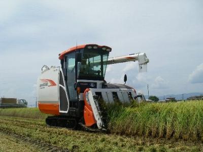 稲刈り開始です!