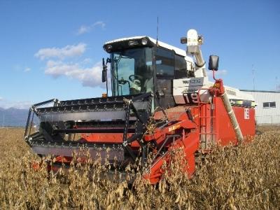 大豆の刈取りスタートです。