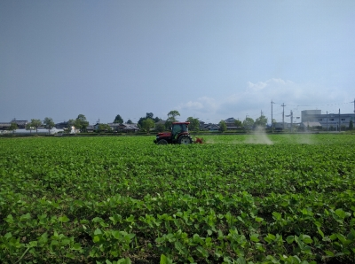 大豆中耕培土