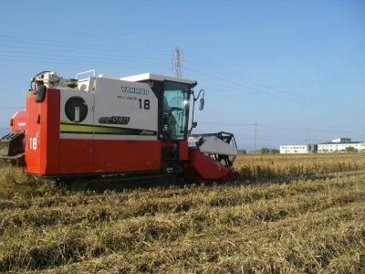 大豆刈り取り開始